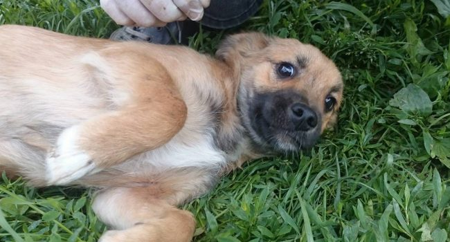 Volunteer for Street Dogs Saving Mission Bacau
