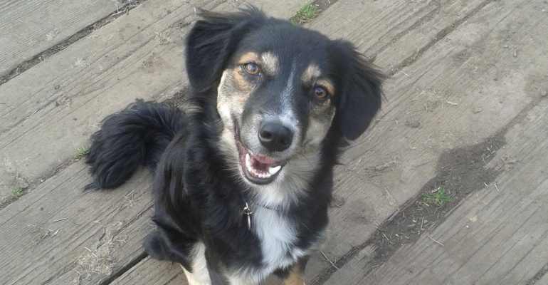 Mura adopted from Street Dogs Saving Mission Bacau