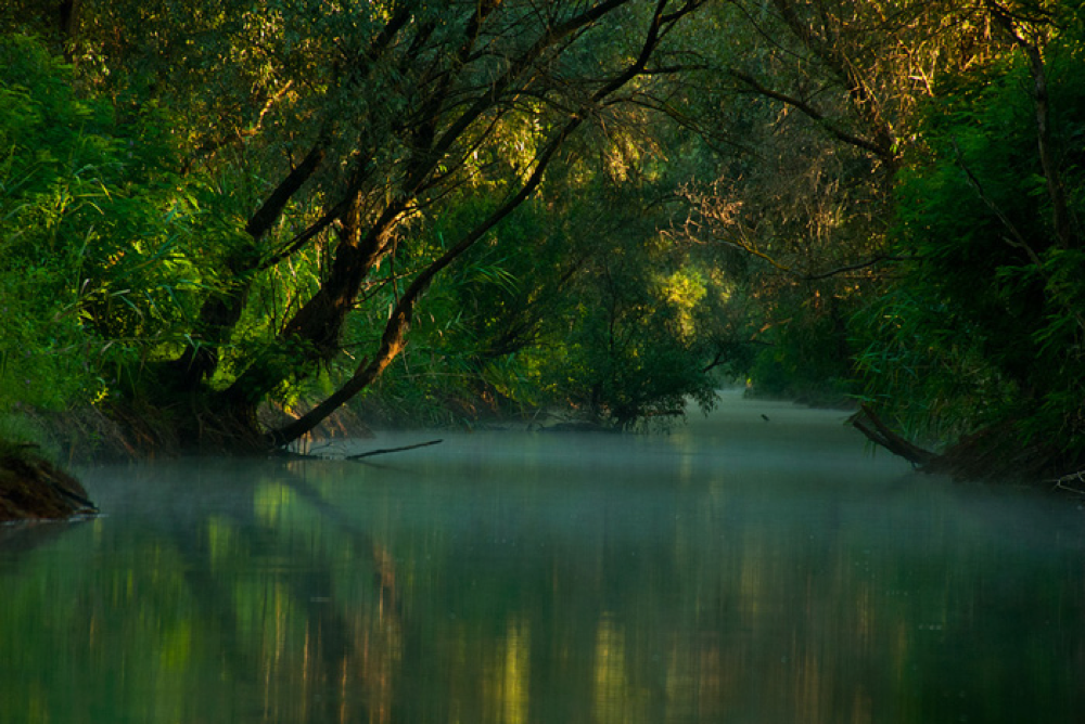 The Danube Delta has 23 different ecosystems