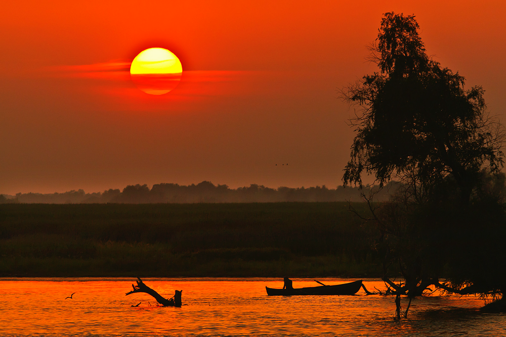 The Danube Delta is home to many unique species of plans and animals